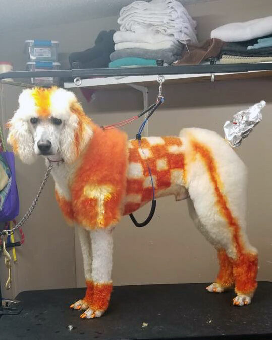 Doesn't everyone have a UT Poodle?