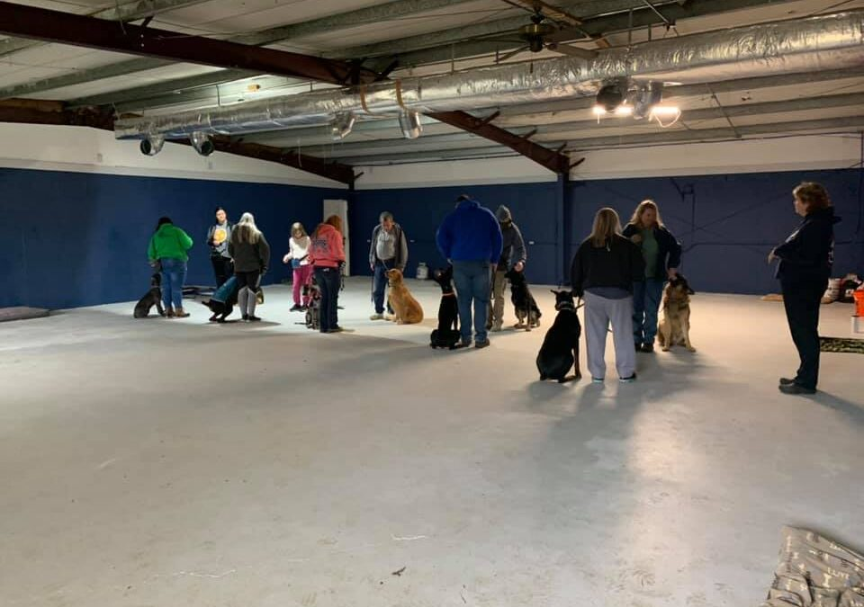 Group classes at Canine Connection
